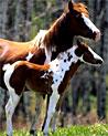 Horse Ecards